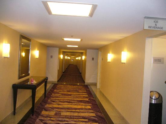 Hilton Los Angeles/Universal City: Renovated hallway to my room
