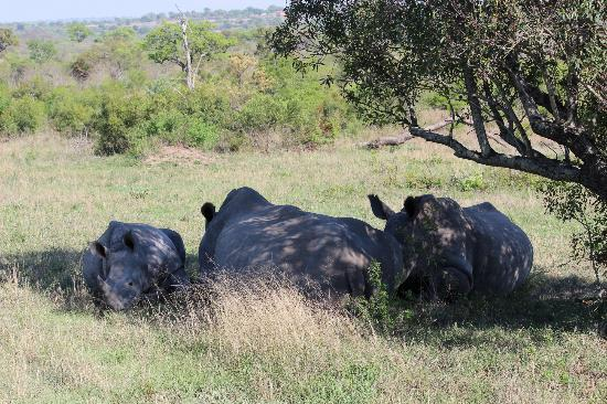 Dulini Lodge: Rhinos