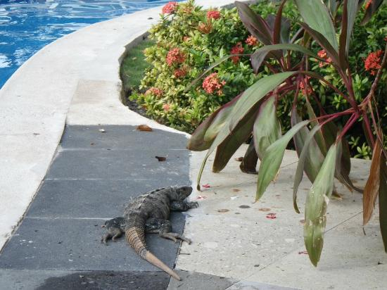 Oasis Palm: Little Iguana