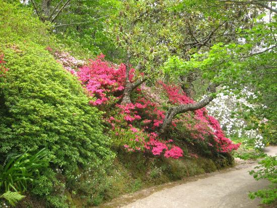 3 Sisters Motel: Leura Gardens