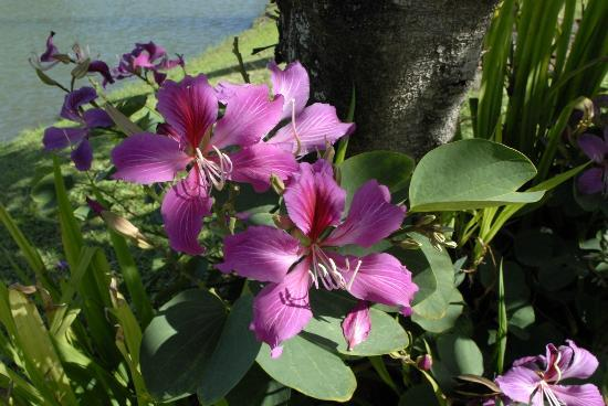 Smiths Tropical Paradise: One of the Numerous Flowering Plants