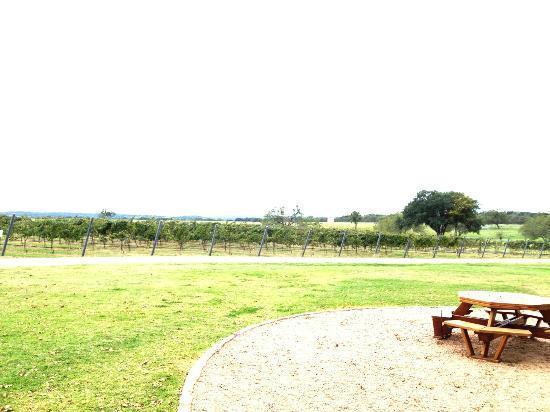 Texas Wine Tours: Winery/Vineyard