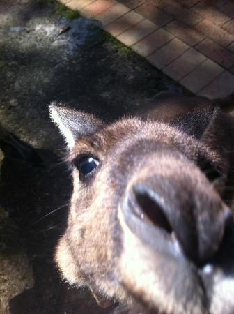 Yelverton Brook Eco Spa Retreat & Conservation Sanctuary: Being Nosy!