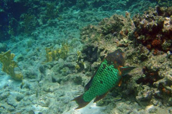Klein Bonaire: snorkeling
