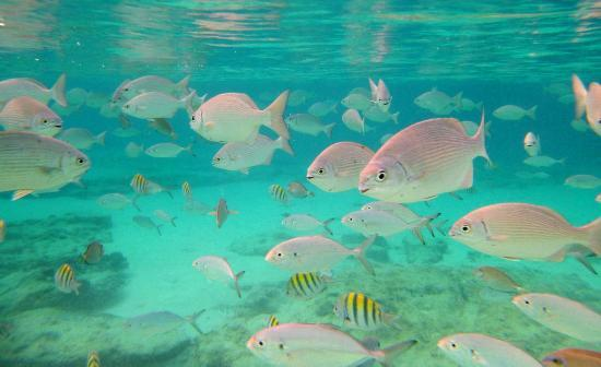 Meliá Cozumel Golf - All Inclusive: Meet the fish...