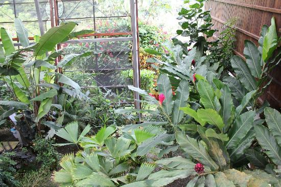 Celeste Mountain Lodge: Indoor Gardens