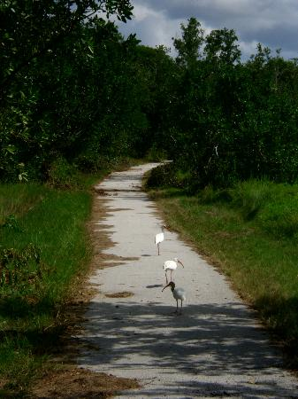 Flamingo Visitor Center: rush hour traffic on the hiking path