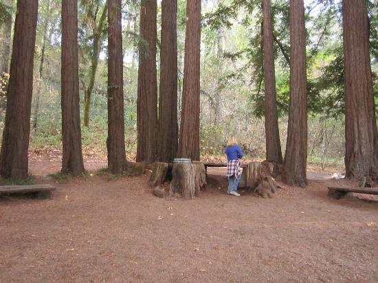 Reverie Winery: The circle of redwoods at Reverie - so cool!