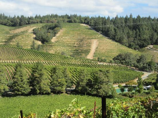 Reverie Winery: Beatiful vineyards