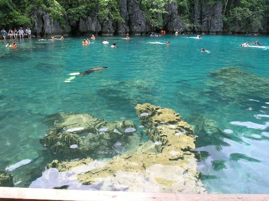 Kayangan Lake Coron Island Palawan Philippines Picture