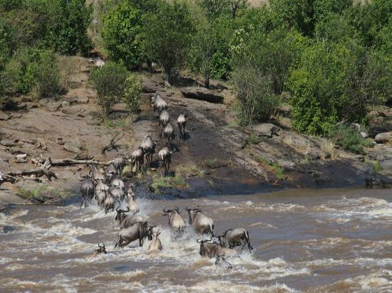 Ngerende Island Lodge: The Wildebeest Migration