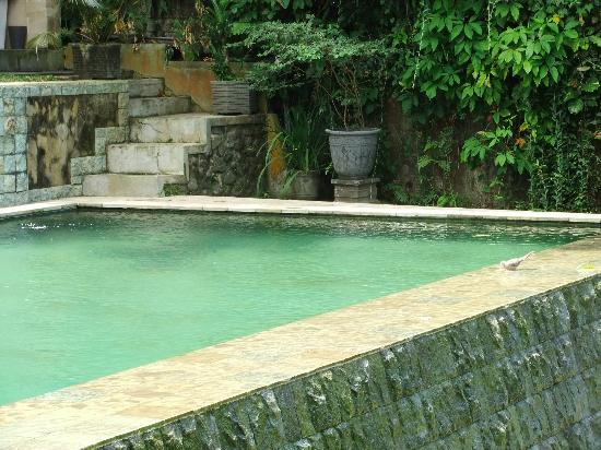 Beji Ubud Resort: Pool