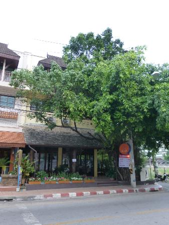 The 3 Sis: the banyan tree at the front of the building