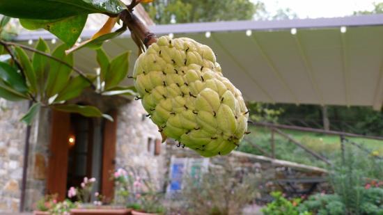 Fattoria Poggerino: Mystery Fruit