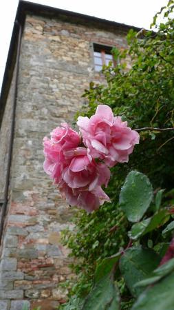 Fattoria Poggerino: Rose