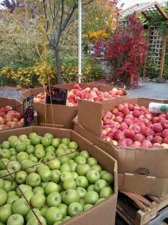 Farmers Market: Olympia farmer's market apples in October, 2012