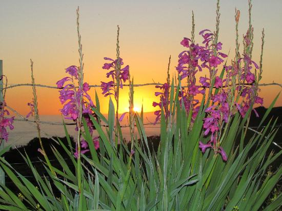 Dolphin View Chalets: Floral sunset in the background