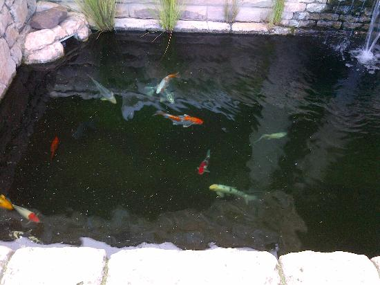 Wild Horses Lodge: The Koi Pond