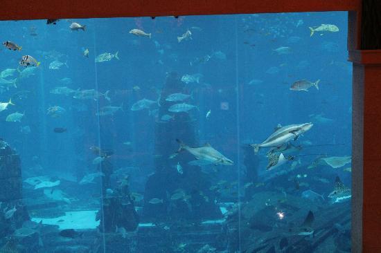 Piscine vue de la chambre picture of atlantis the palm for Atlantis piscine