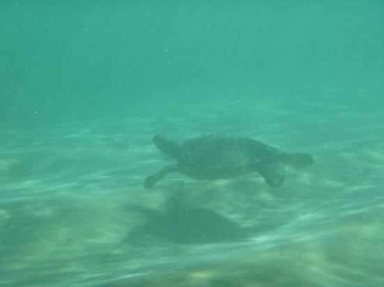 Snorkel Bob's Kauai