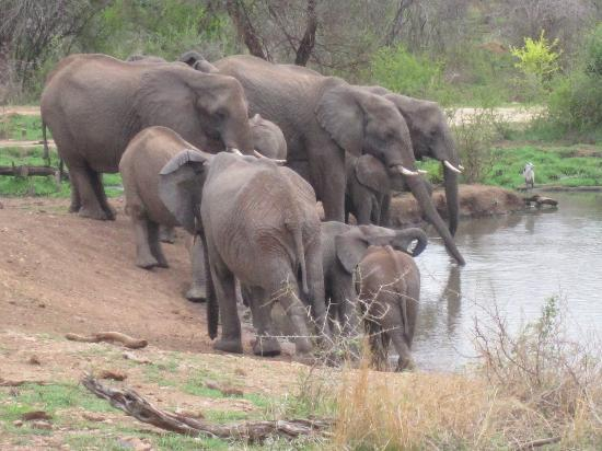Jaci's Safari Lodge: See the traffic at Jaci's watering hole!