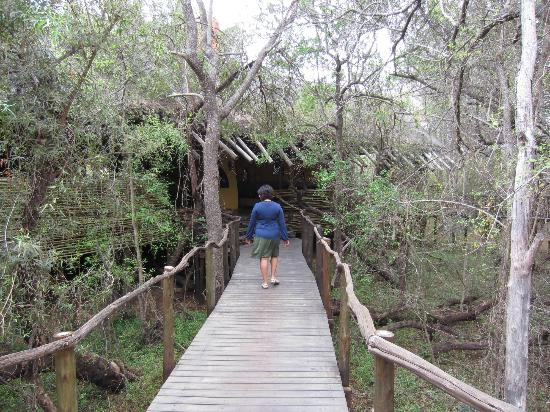 Jaci's Safari Lodge: The walkway to the Big 5!