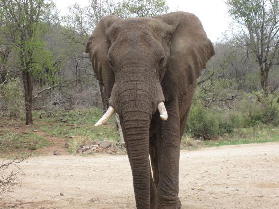 جيسيز لودجز: Where else can you be chased by the animals? Up close and personal. 