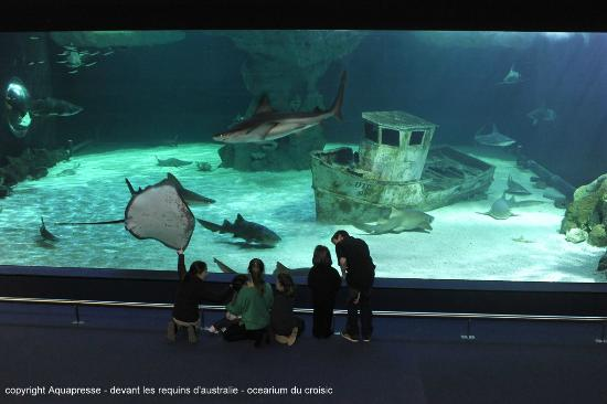 Le Croisic, France: devant les requins - ocearium du croisic - copyright aqua press