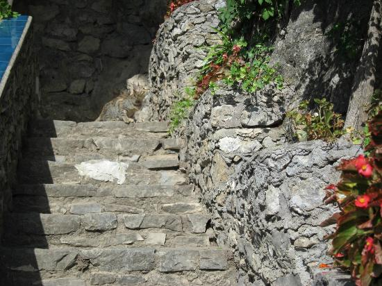 Villa San Michele: more steps!