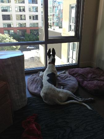 Hotel Indigo San Diego Gaslamp Quarter: My Greyhound loved watching out the window!