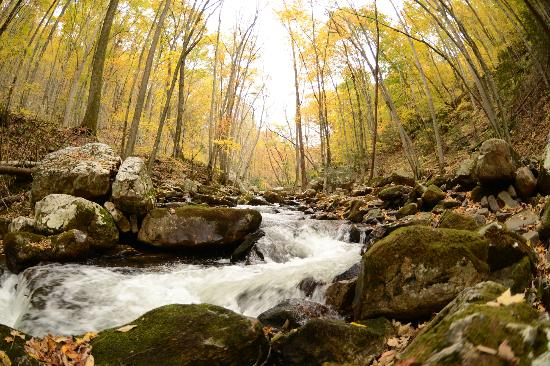 Stony Creek (VA) United States  city photo : Little Stony Creek, on the hike to Cascade Falls Picture of Cascade ...