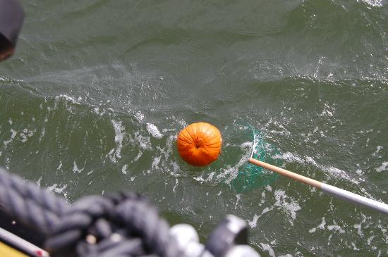 Hilton Head, Caroline du Sud : The Floating Pumpkins of the Calibogue!
