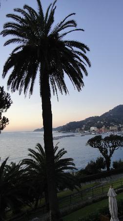 Hotel Continental: baie et palmier