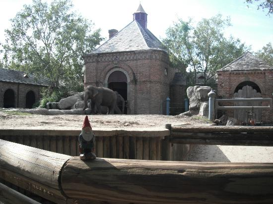 Audubon Zoo: Elephants in the Asian Domain