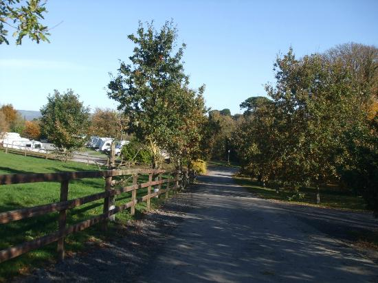 Tree Grove Camping Park: Avenue to and from the site
