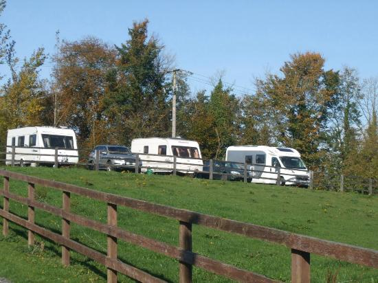Tree Grove Camping Park: Grass pitches near the shower block