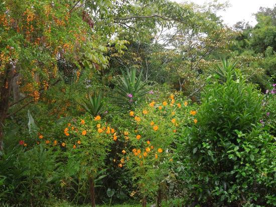 Villa Escazu: garden