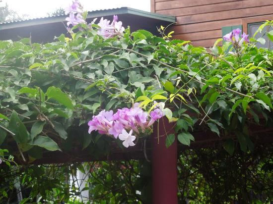 Villa Escazu: flowering vines by gazebo