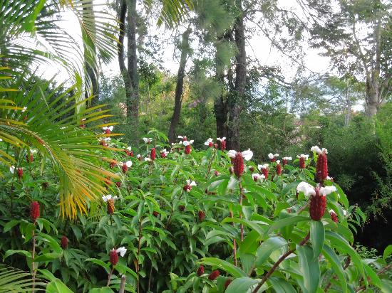 Villa Escazu: everything seemed to be blooming