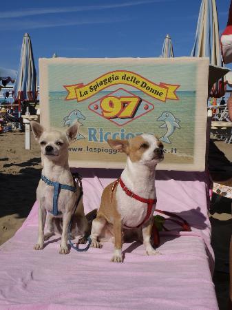 La Spiaggia delle Donne : Spiaggia per Cani