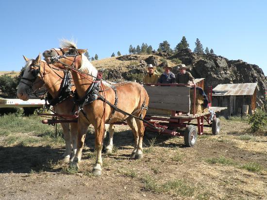 Rocking Z Guest Ranch: Wagon ride