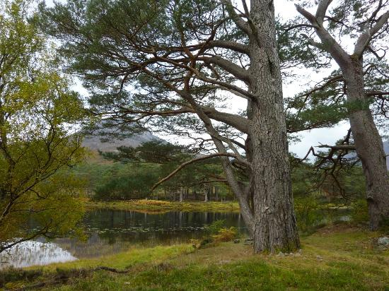 The Torridon: Coulin Estate