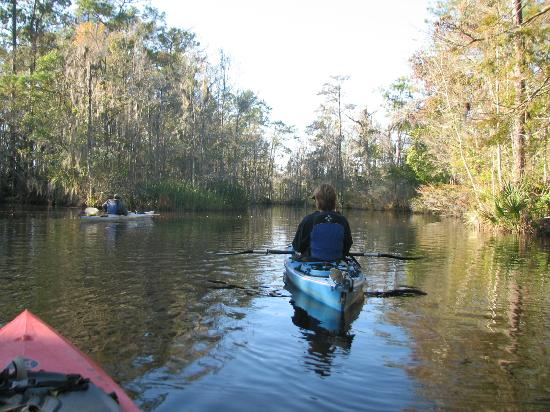 Altamaha Coastal Tours: Cathead Creek