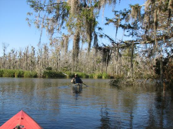 Altamaha Coastal Tours: Beautiful day in coastal Georgia