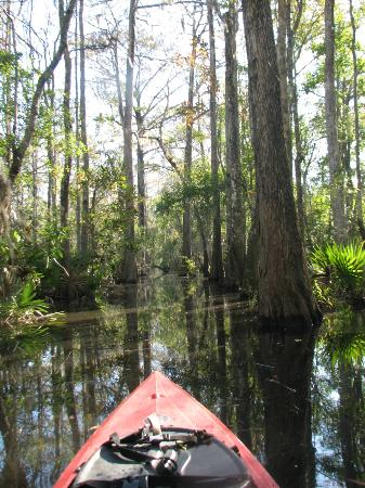 Altamaha Coastal Tours: Irrigation channel