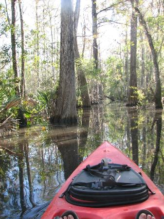 Altamaha Coastal Tours: Great for a beginner