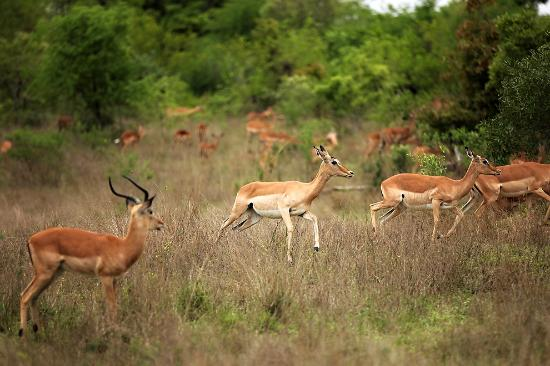 Savanna Private Game Reserve: One step at a time