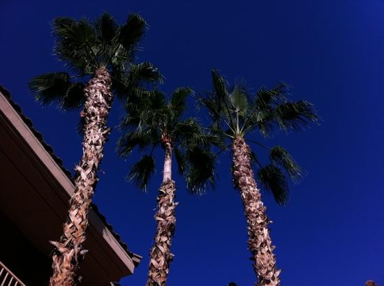 Holiday Inn Express Hotel and Suites Scottsdale - Old Town: from the pool