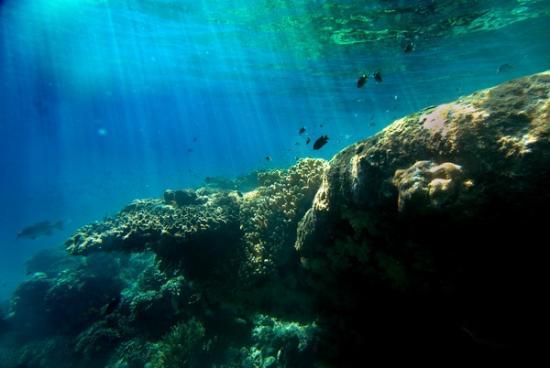 West Bali National Park, Indonesien: Diving