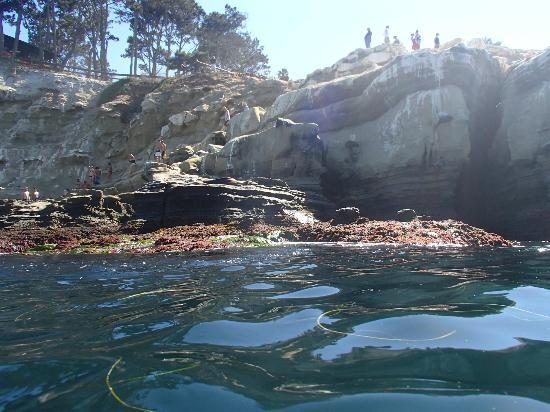 La Jolla Kayak : Cliff with seals